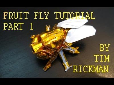 Fruit Fly Tutorial, Tim Rickman (Part 1)