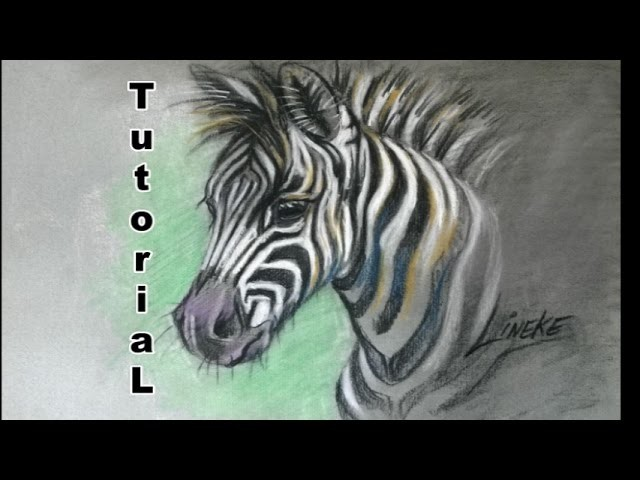 How to draw a Zebra foal. animal drawings. #38