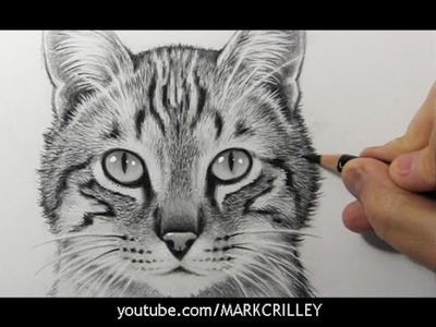 Drawing Time Lapse: Cat