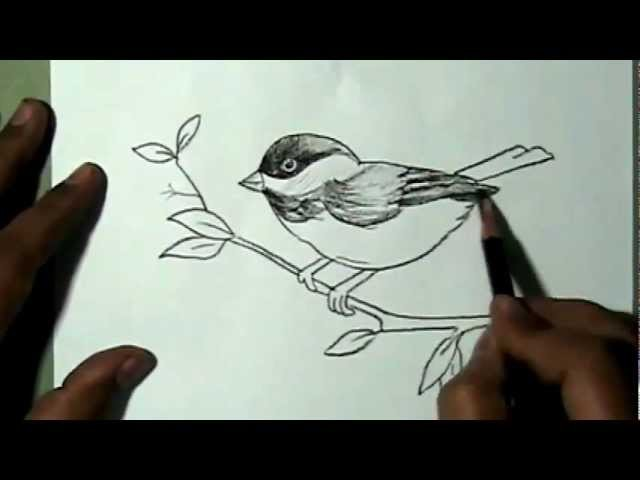 How to draw a beautiful sparrow sitting on branch