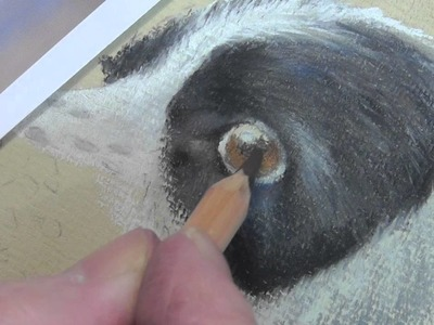 How to Draw a Dog's Eye in Pastel Pencils