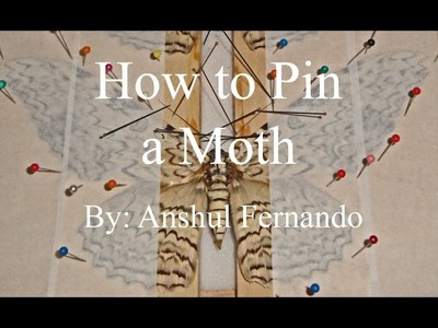 How to Pin a Moth