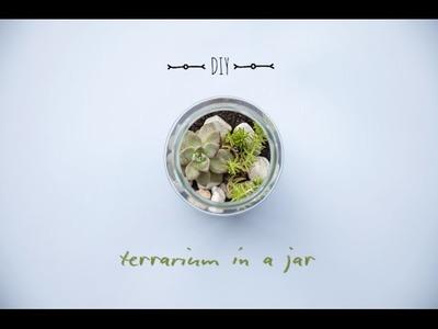 Annabel Langbein's DIY Cactus Terrarium