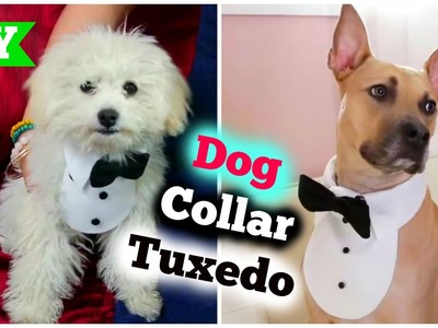 DIY Dog Collar Tuxedo