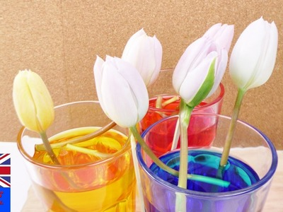 UPDATE: THE COLOURED TULIPS | how to dye flowers with food coloring