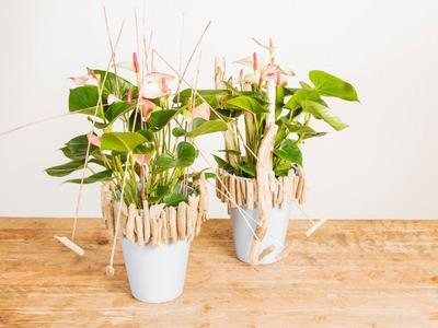 Elegant & Natural Anthurium Design | Flower Factor How To | Plant Creation