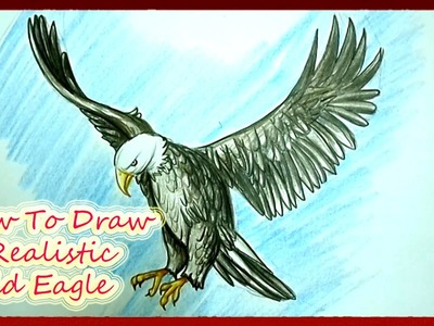 How To Draw A Realistic Bald Eagle Step by Step