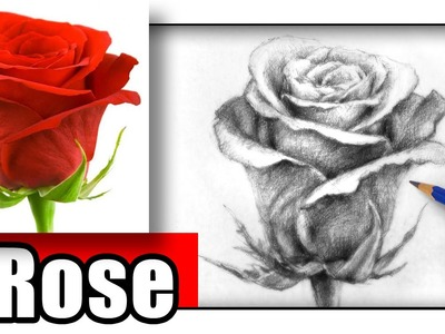 How to Draw a Rose with Pencil the Easy Way