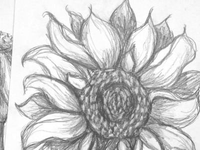 How to Sketch a Sunflower