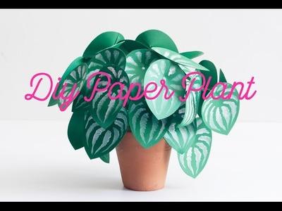 DIY paper plant watermelon peperomia