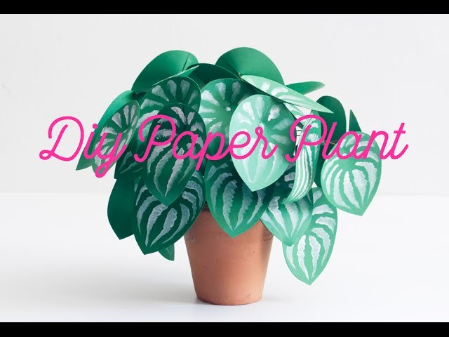 DIY paper plant watermelon peperomia