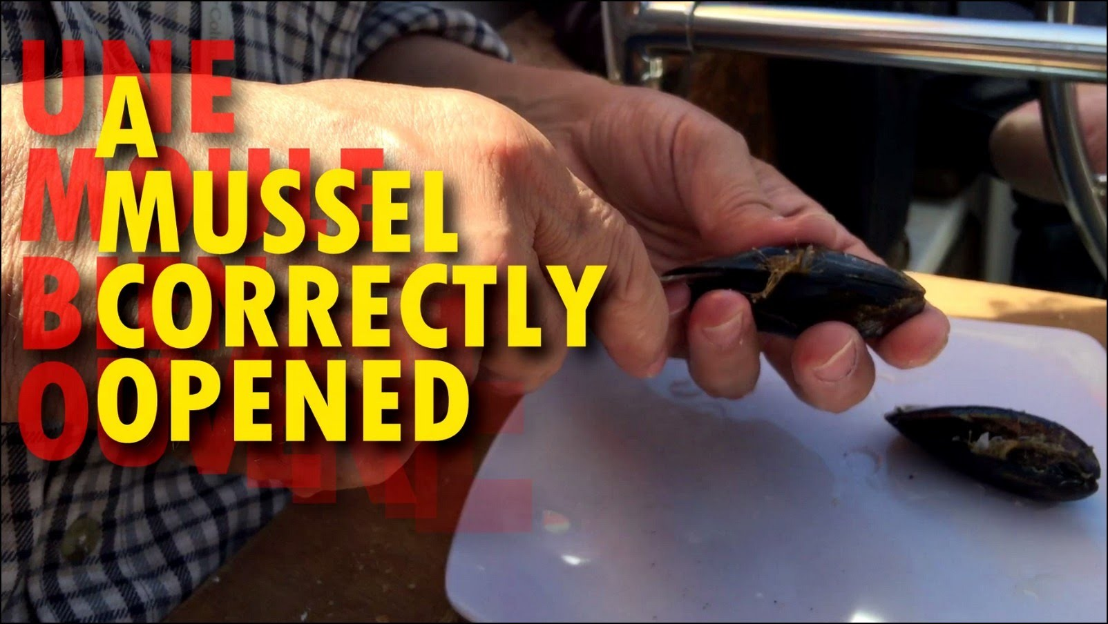 How to open a mussel easily | ★ | Germaine bricole | DIY