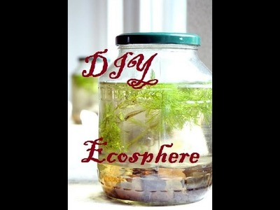 Building your own DIY Ecosphere