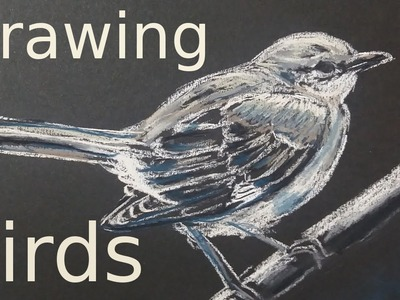 How to Draw a Mockingbird with Grey Hard Pastels LYRA (Time Lapse) #howtodraw
