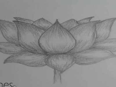 How to draw lotus flower
