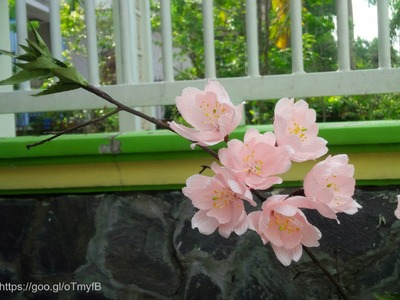 Cherry Blossom with crepe paper - Craft Tutorial
