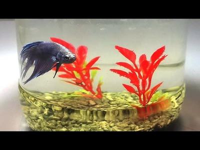 How to Make Simple Betta Fish Aquarium | DIY Homemade