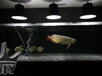 HOW TO: EASY $7 DIY AQUARIUM LIGHT - pendant style