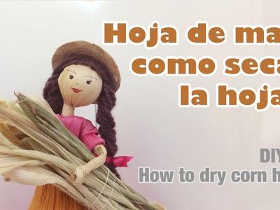Como secar la hoja de maíz 42. how to dry corn husk home process