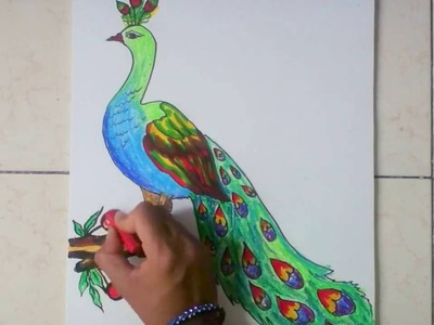 How to draw peacock in simple steps
