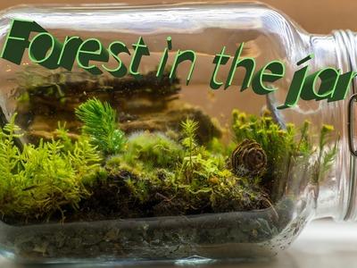 How to make forest jar terrarium
