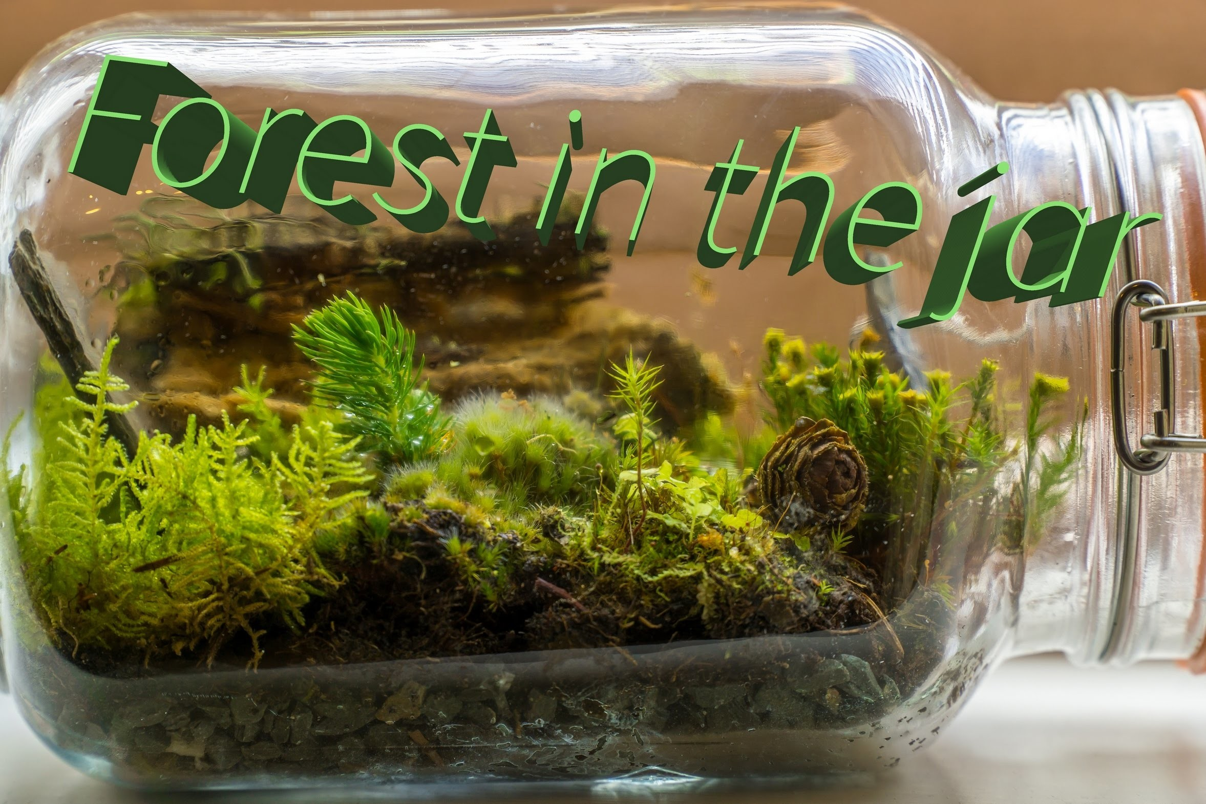 terrarium project making As i'm making a terrarium for the first time this article helped me make a terrarium for my class project a anonymous sep 15, 2017.