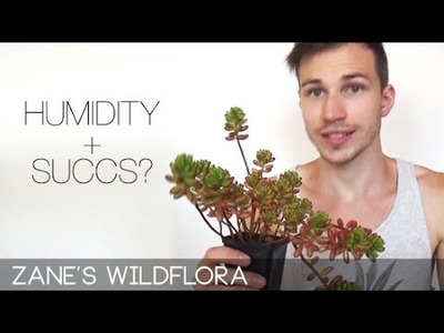 How to care for succulents in the humid tropics