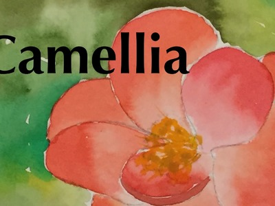 How to Paint a Camellia in Watercolor Tutorial Watercolour Flower