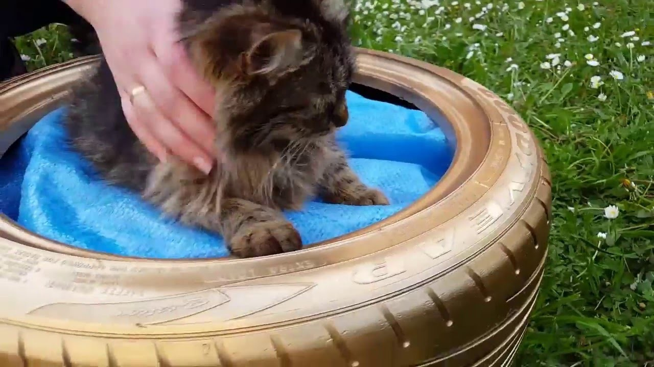 DIY Bed for Cat in 3 MINUTES