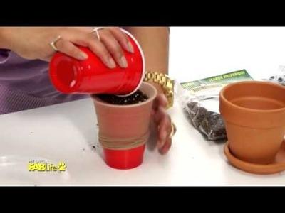 DIY Chia Seed Pet