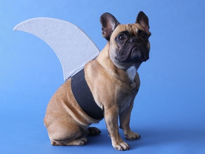 DIY Shark Fin Costume - Martha Stewart