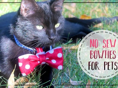 How To Make No-Sew Bow Ties For Pets