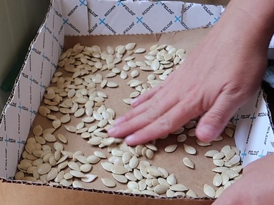 How To Save Pumpkin Seeds!