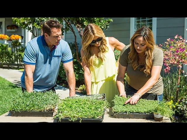 How To - Shirley Bovshow's Stepable Plant Pathways - Hallmark Channel