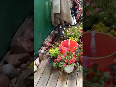 How to water your plants while on vacation.