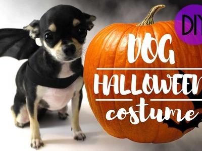 DOG HALLOWEEN EASY COSTUME | DIY