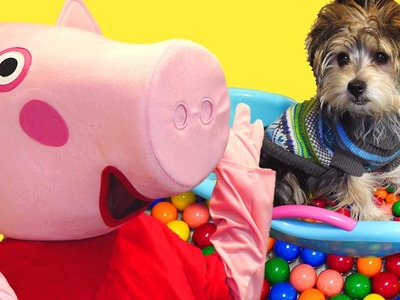 Gumball Bath - Peppa Pig Dog Sitter for DCTC Puppy - Peppa Pig in Real Life
