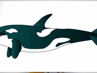How to draw a KILLER WHALE step by step