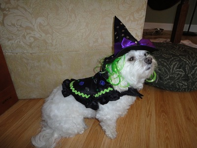 How to Make a DOG'S COSTUME! Really Cute!