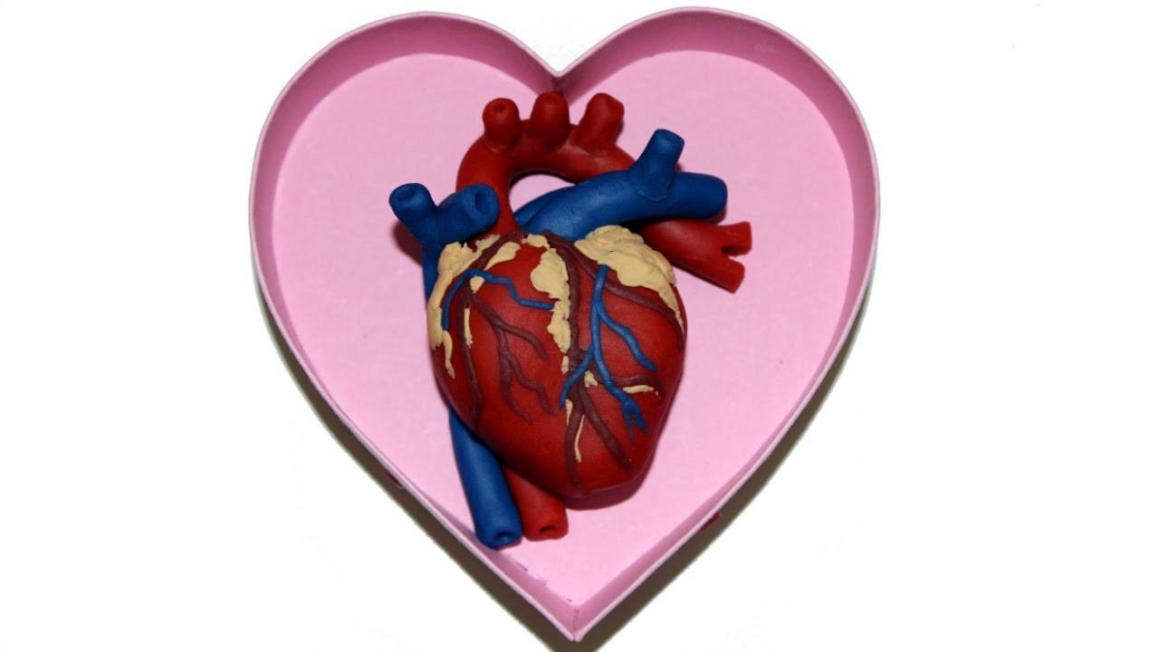 How to Make a Human Heart for Valentine's Day with Play Doh by Tiger Tomato