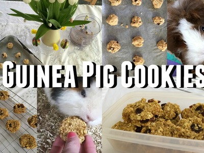 DIY Guinea Pig Treats - Cookies |♡Imy'sAnimals♡