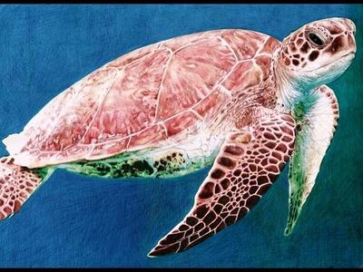 Ballpoint Pen Sea Turtle Drawing