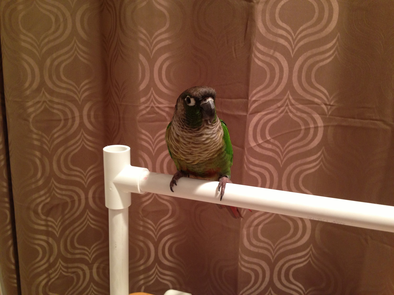 DIY Bird stand (small)