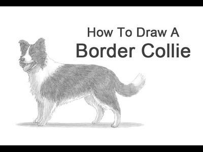 How to Draw a Dog (Border Collie)