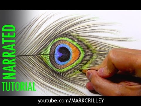 Colored Pencils: Tips and Techniques [Peacock Feather]