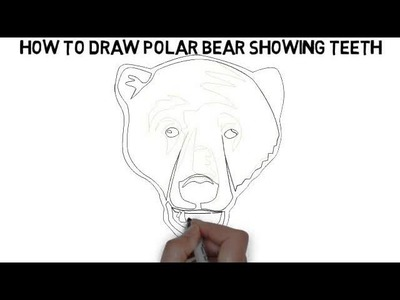 How To Draw Polar Bear Showing Teeth Quickly And Easily