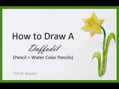 How to Draw a Daffodil in Watercolor