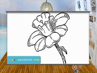 How to draw Daffodils - Easy Daffodil Drawing - Sketch