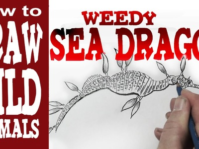 How to Draw the Weedy Sea Dragon (Beginner)