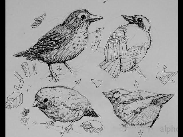 Pen & Ink Drawing Tutorials, How to draw birds